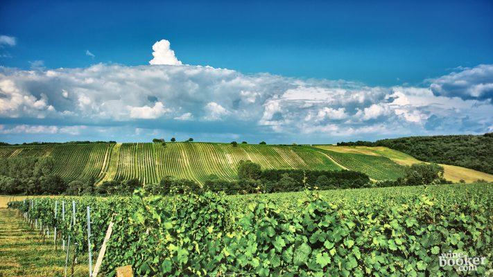 Blick auf die Riede Horchberg im Burgenland